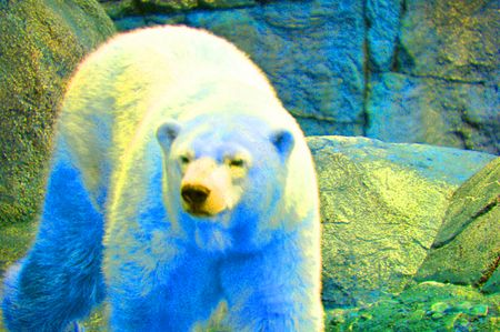 COLOREDPolarBear