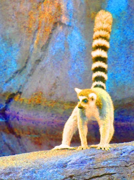 COLOREDLemur