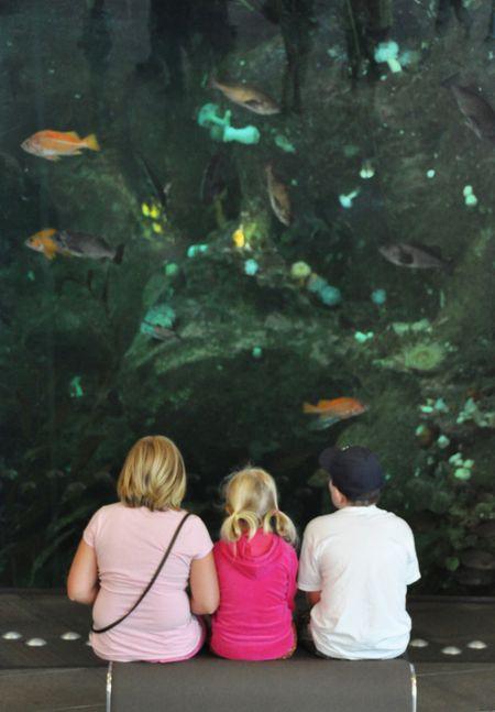 KidsAndWallOfFish
