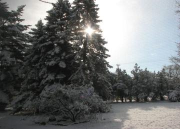 Snowymorn